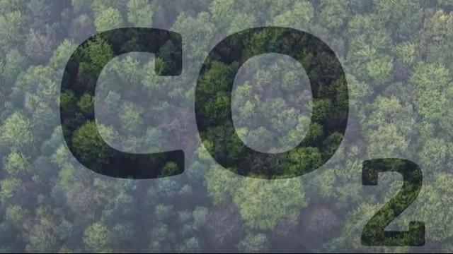 Der Wald ist ein riesiger CO2-Speicher